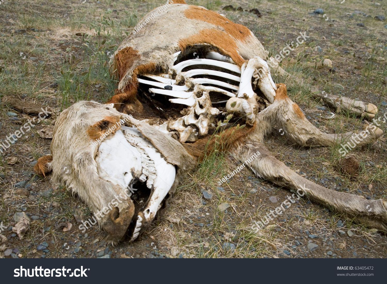Dead Animals Arid Steppe Stock Photo 63405472