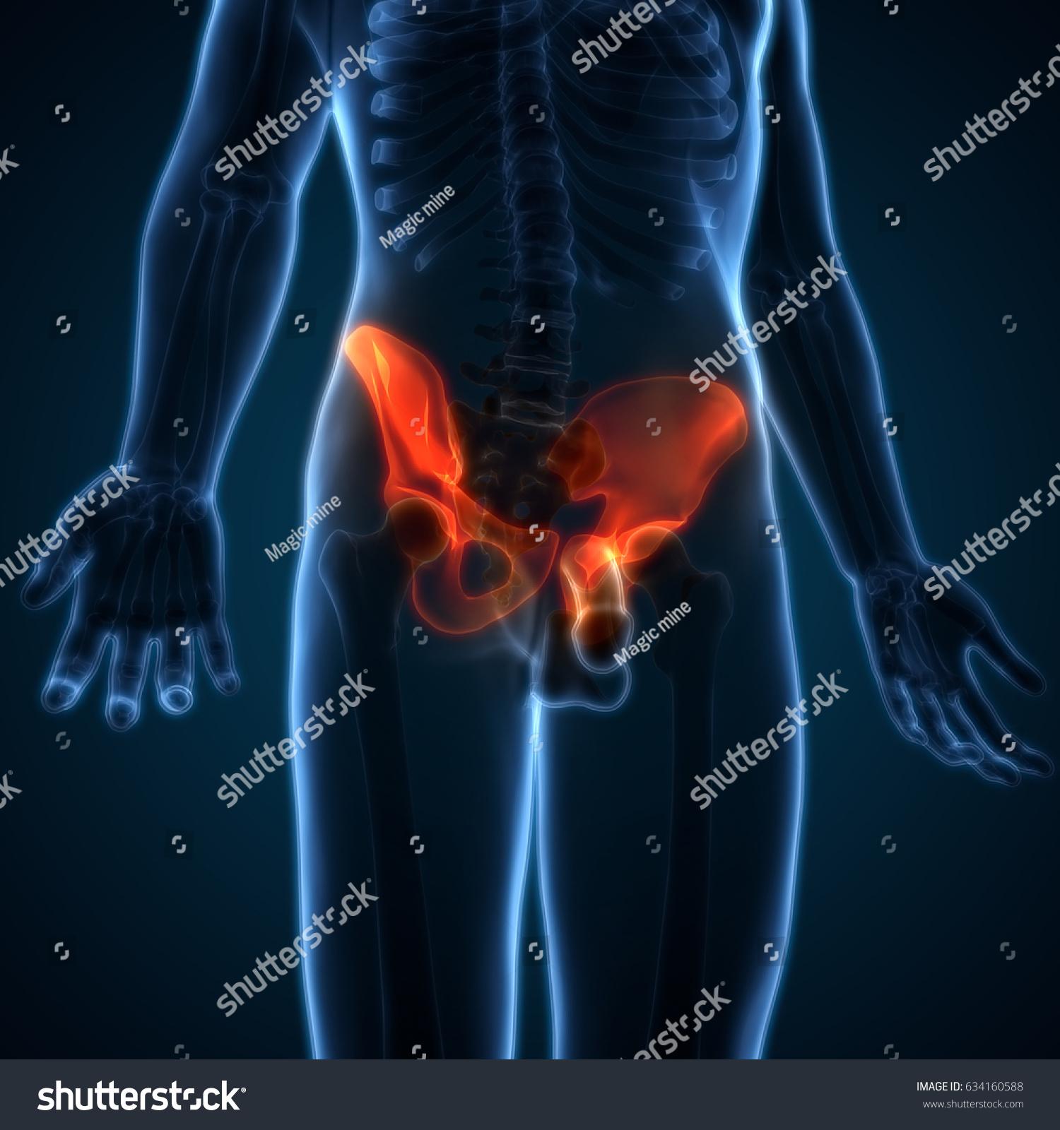 Human Body Bone Joint Pains Anatomy Hip 3d Ez Canvas