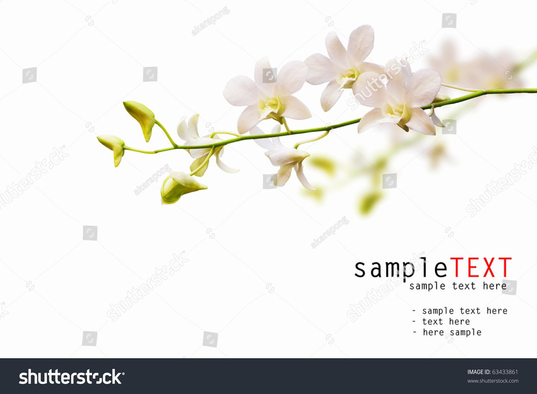White Dendrobium Orchid