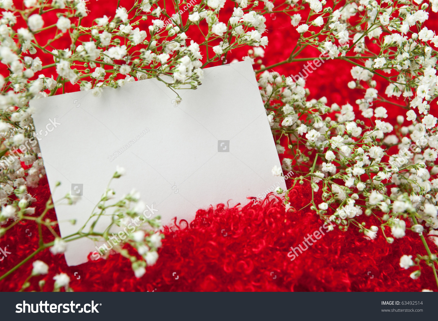 Blank Invitation Card White Flowers On Photo 63492514 – Blank Invitation Card