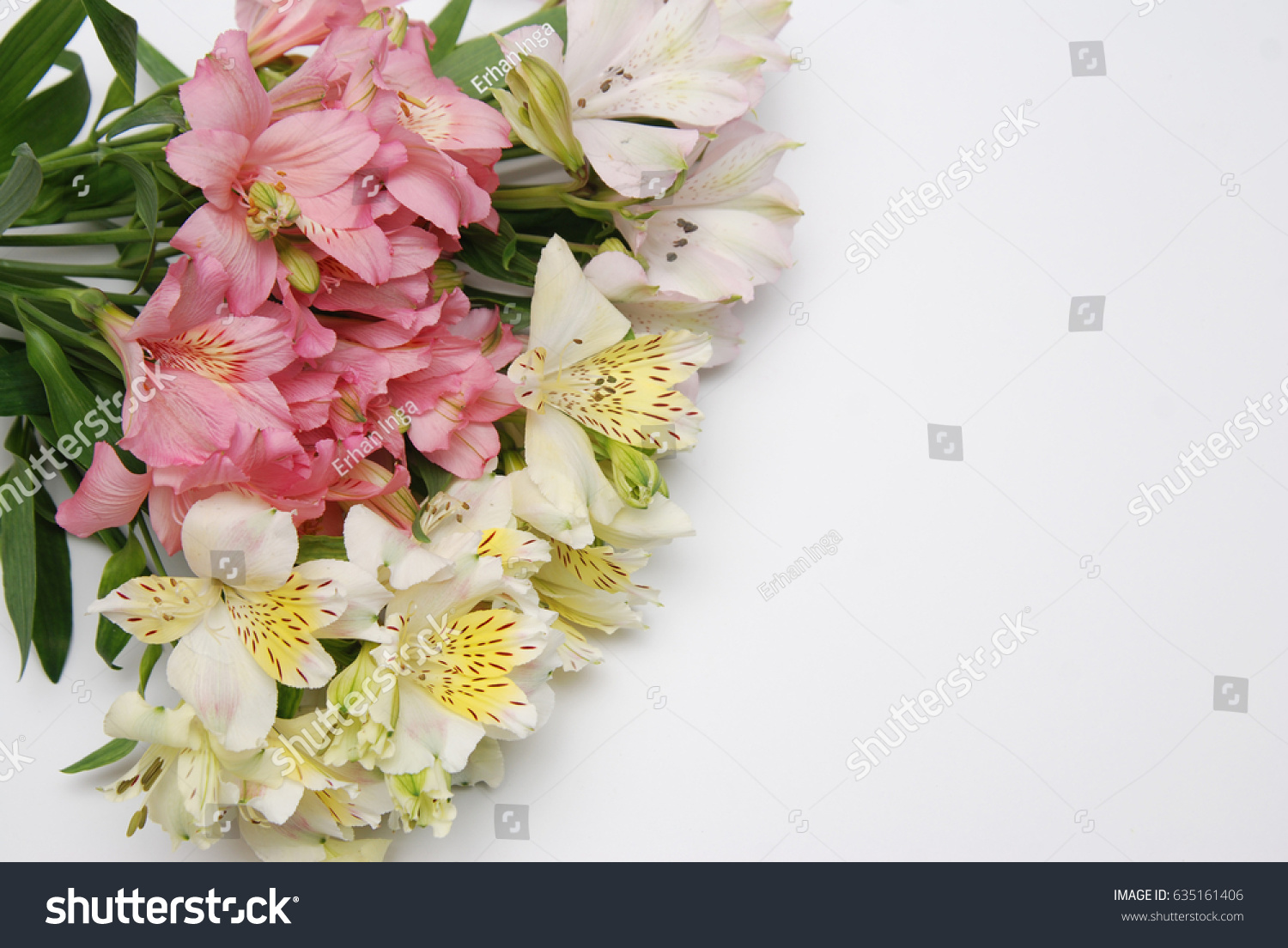 Astrometry Pink Yellow Flowers Isolated Stock Photo Download Now