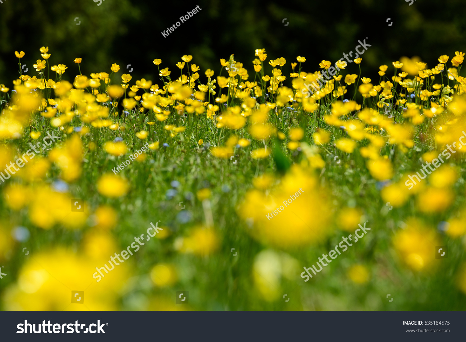 Spring Yellow Mountain Flower Blurred Background Stock Photo Edit