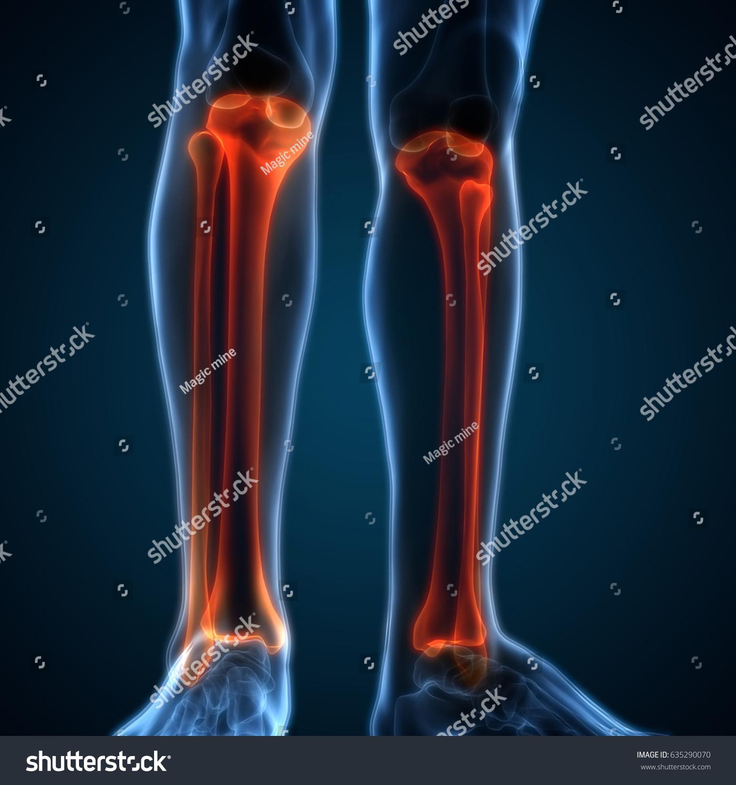 Human Body Bone Joint Pains Anatomy Stock Illustration 635290070 ...