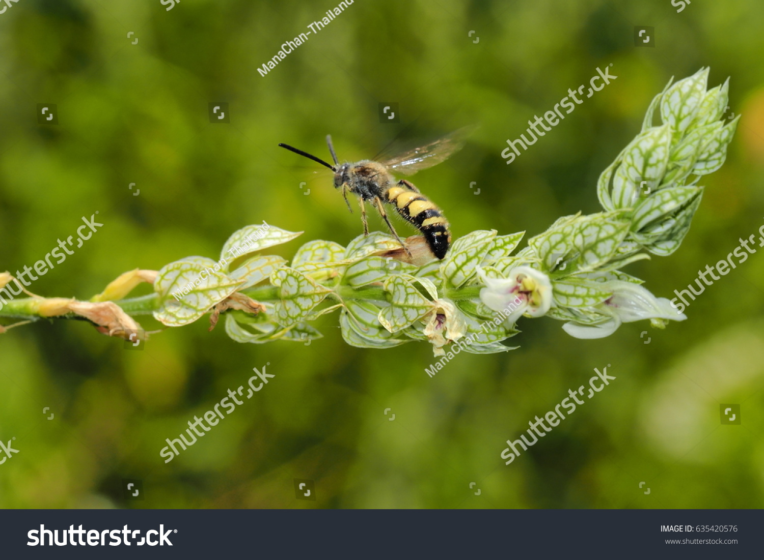 Black And Yellow Color Insect Flying On Flowers Ez Canvas