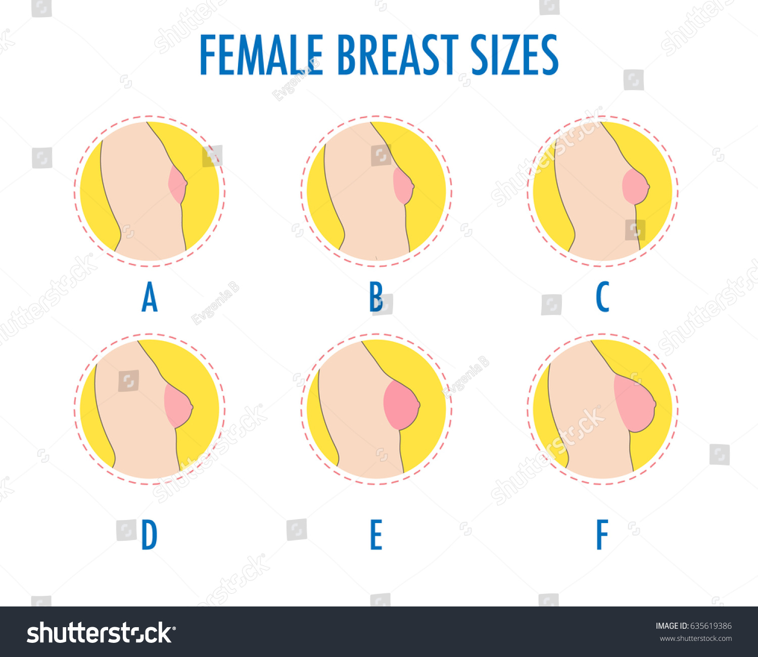 Size of boobs