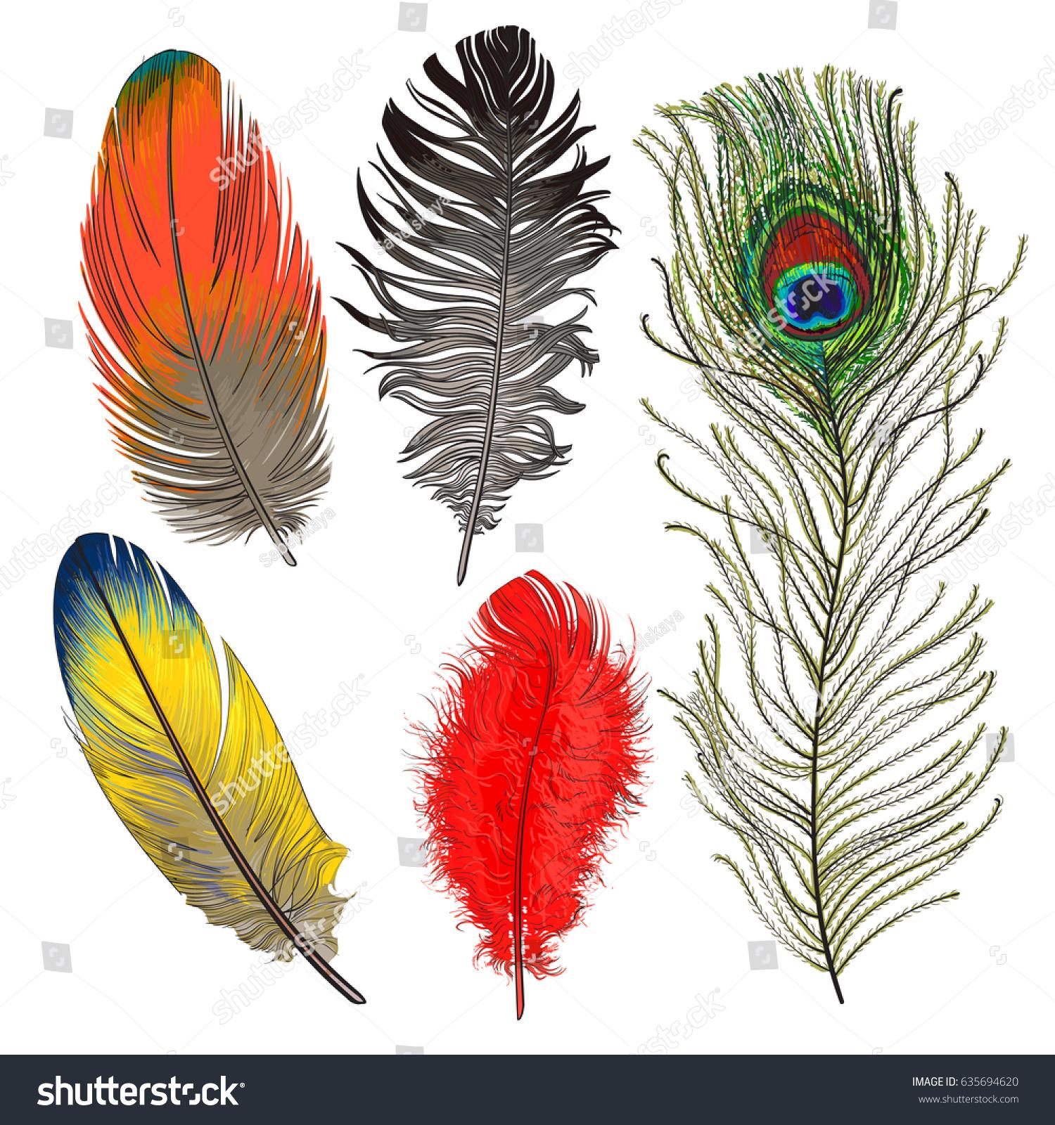 hand drawn set various colorful bird stock vector 635694620