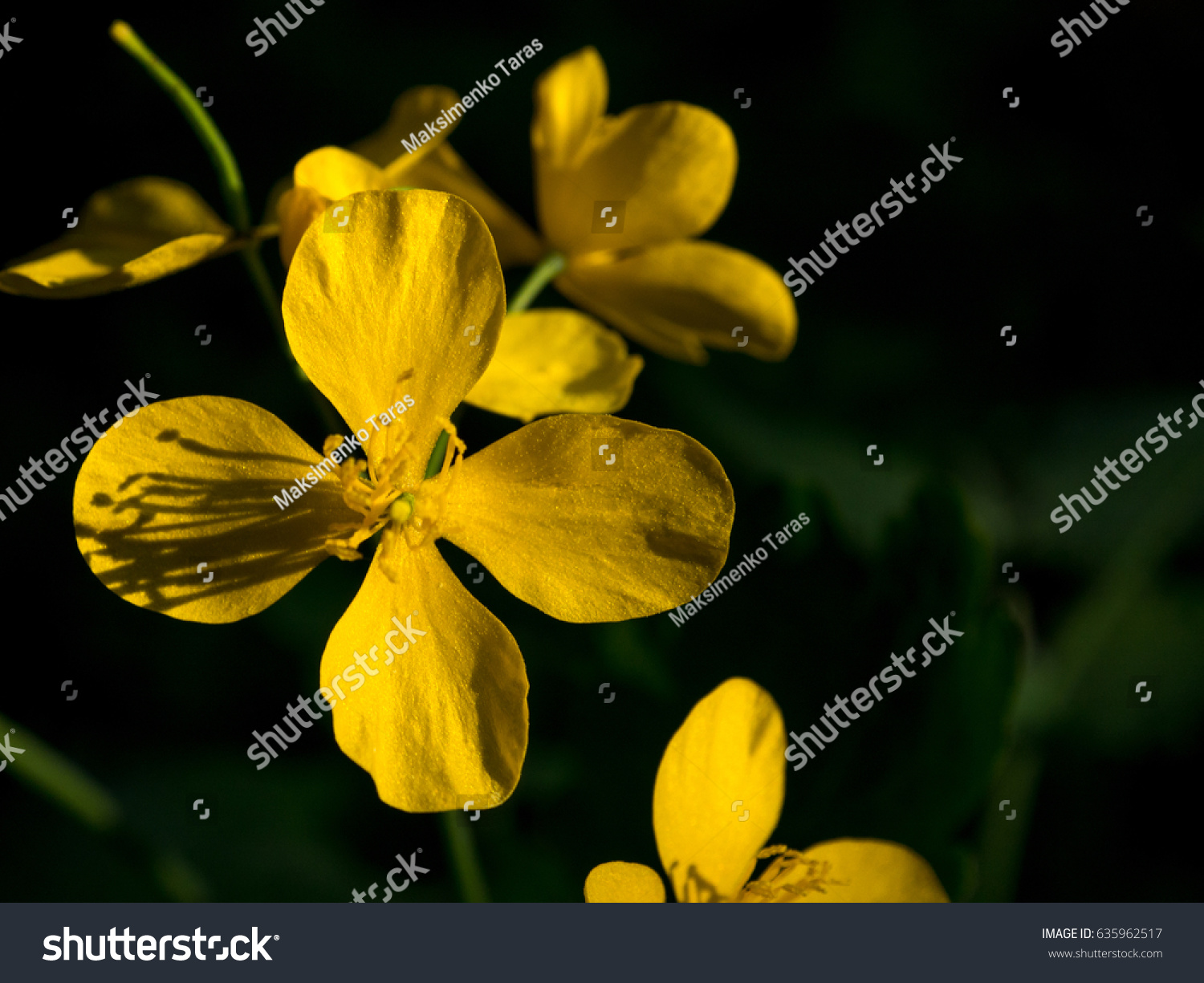 Forest Flowers Spring Flowers Small Yellow Stock Photo Edit Now