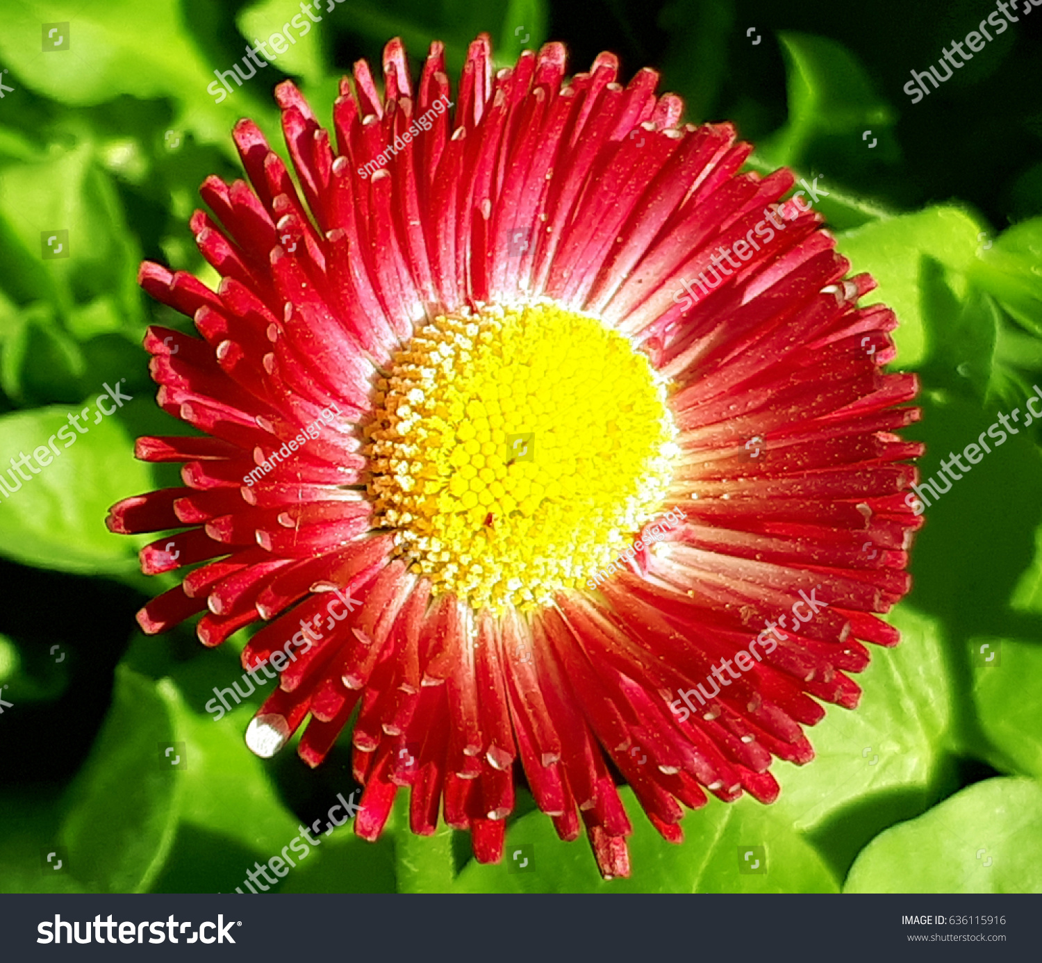 Beautiful red flower on greens stock photo download now 636115916 beautiful red flower on the greens izmirmasajfo