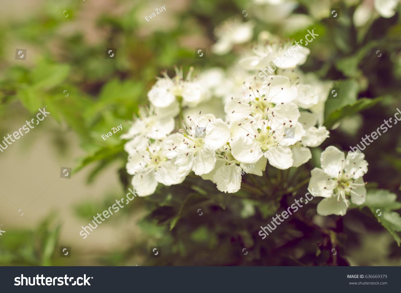 Small white spring flowers ez canvas mightylinksfo