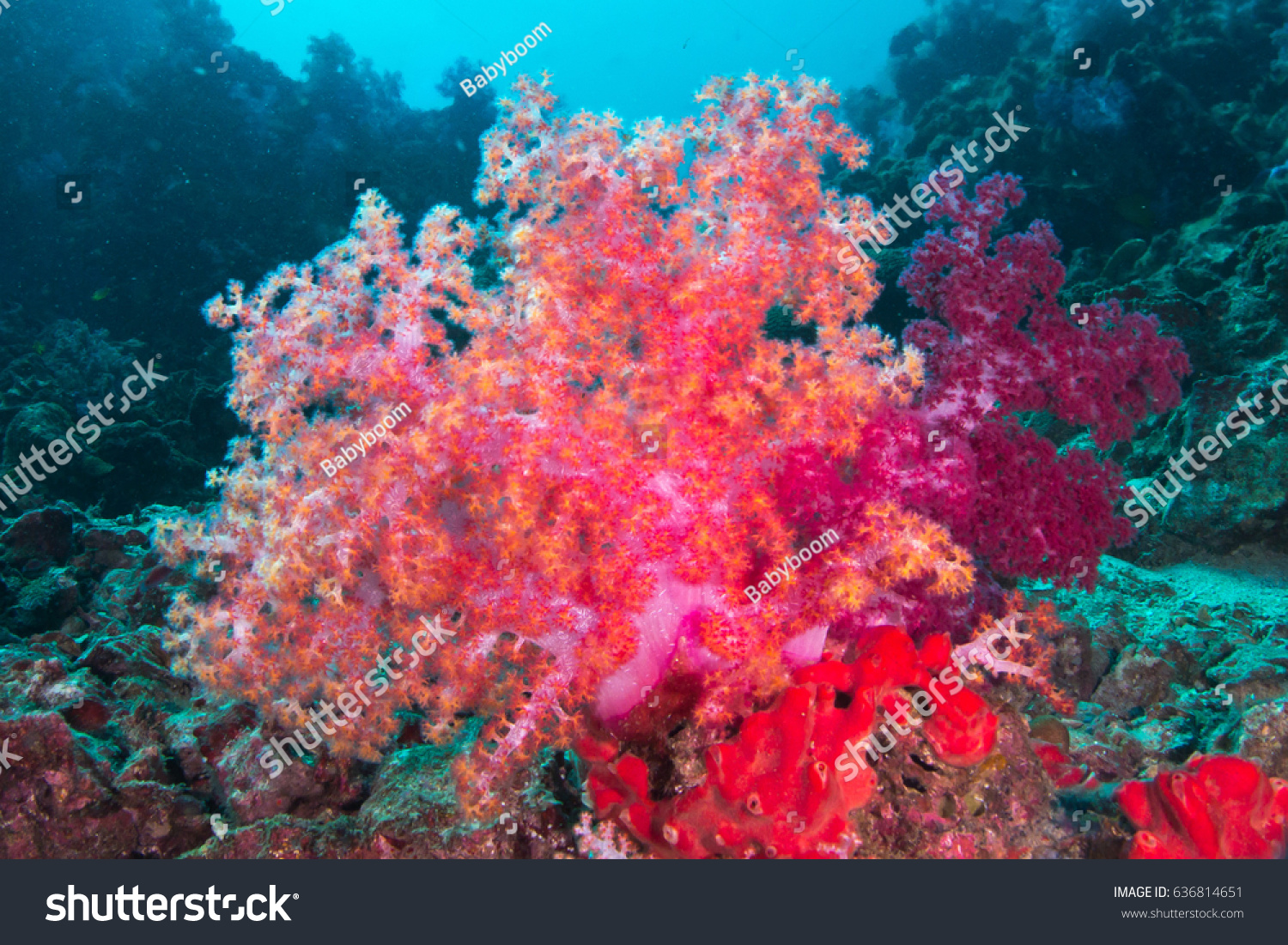 Texture Soft Carol Colorful Underwater Nature Stock Photo (Royalty ...