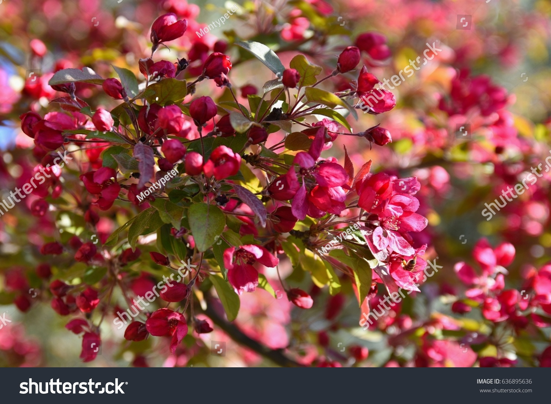 Springtime Beautiful Blossom Tree Nature Scene With Sun In Sunny