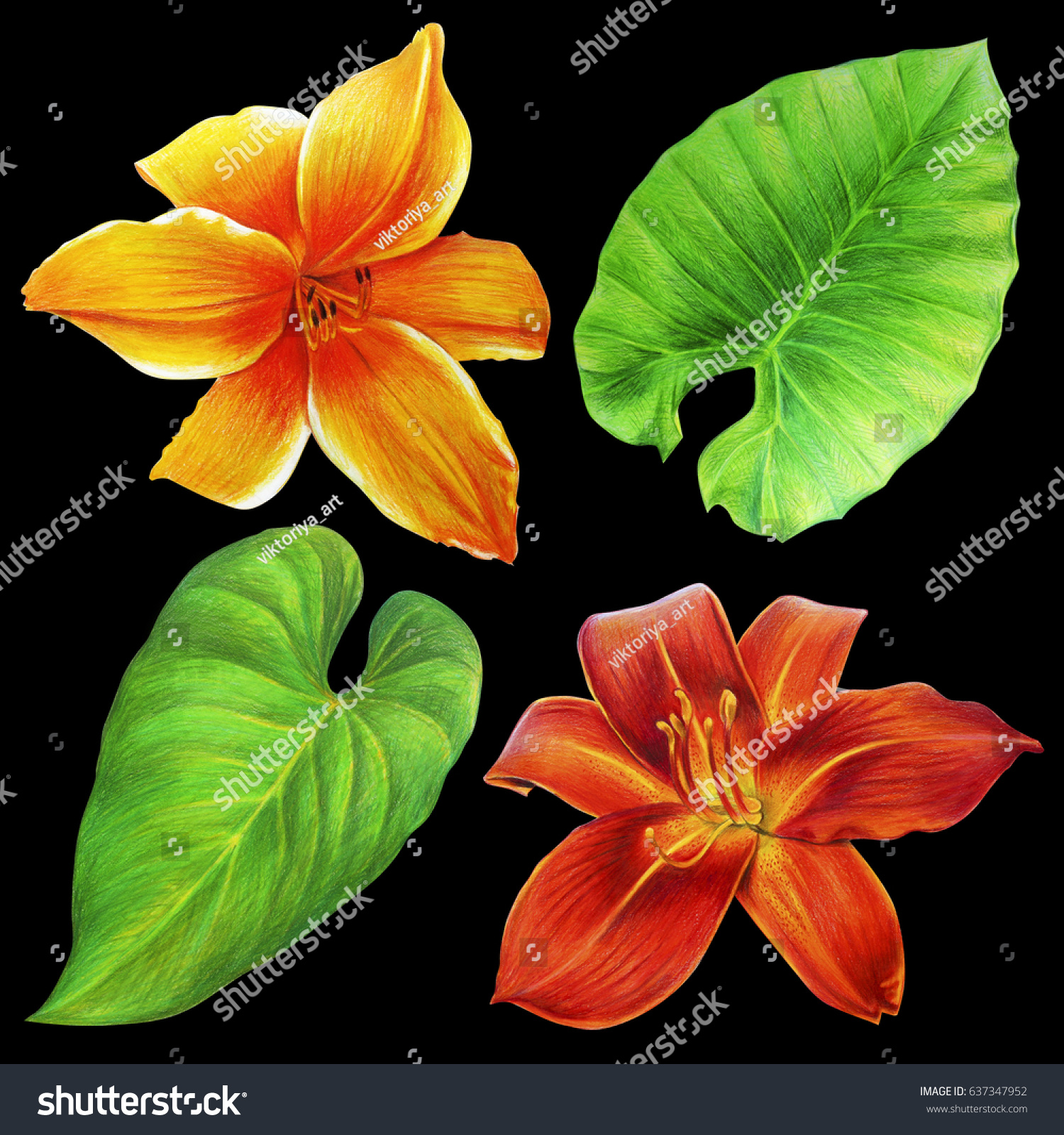 Beautiful exotic flowers leaves on black stock illustration beautiful exotic flowers and leaves on black background drawing izmirmasajfo