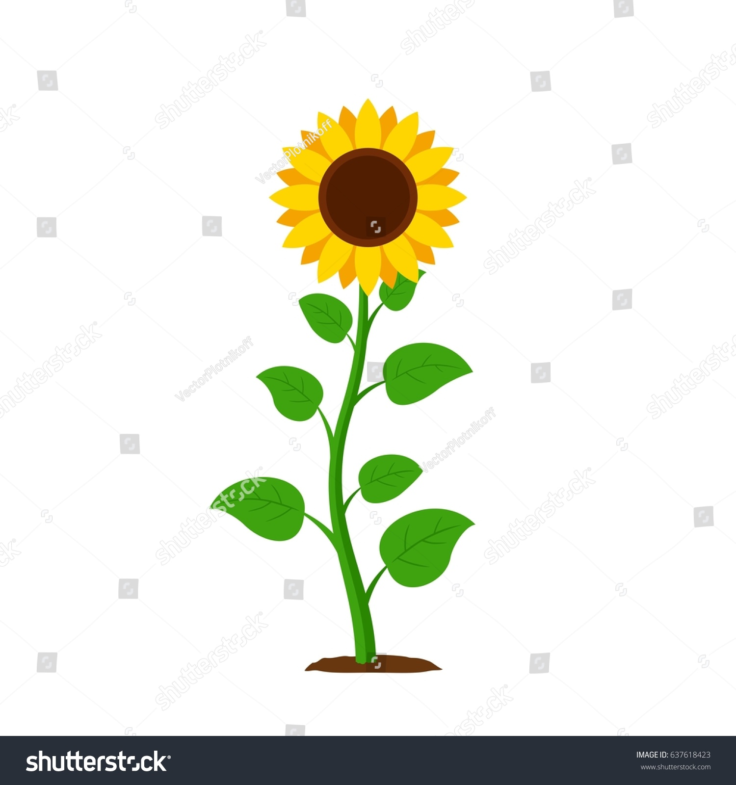 Sunflower with green leaves in flat style isolated on white background. Vector Illustration