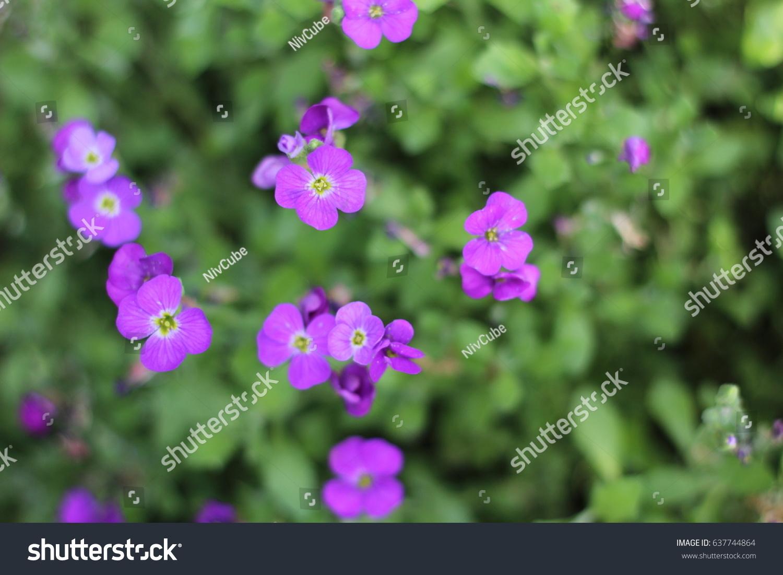 Little Purple Flowers Above Stock Photo Edit Now 637744864