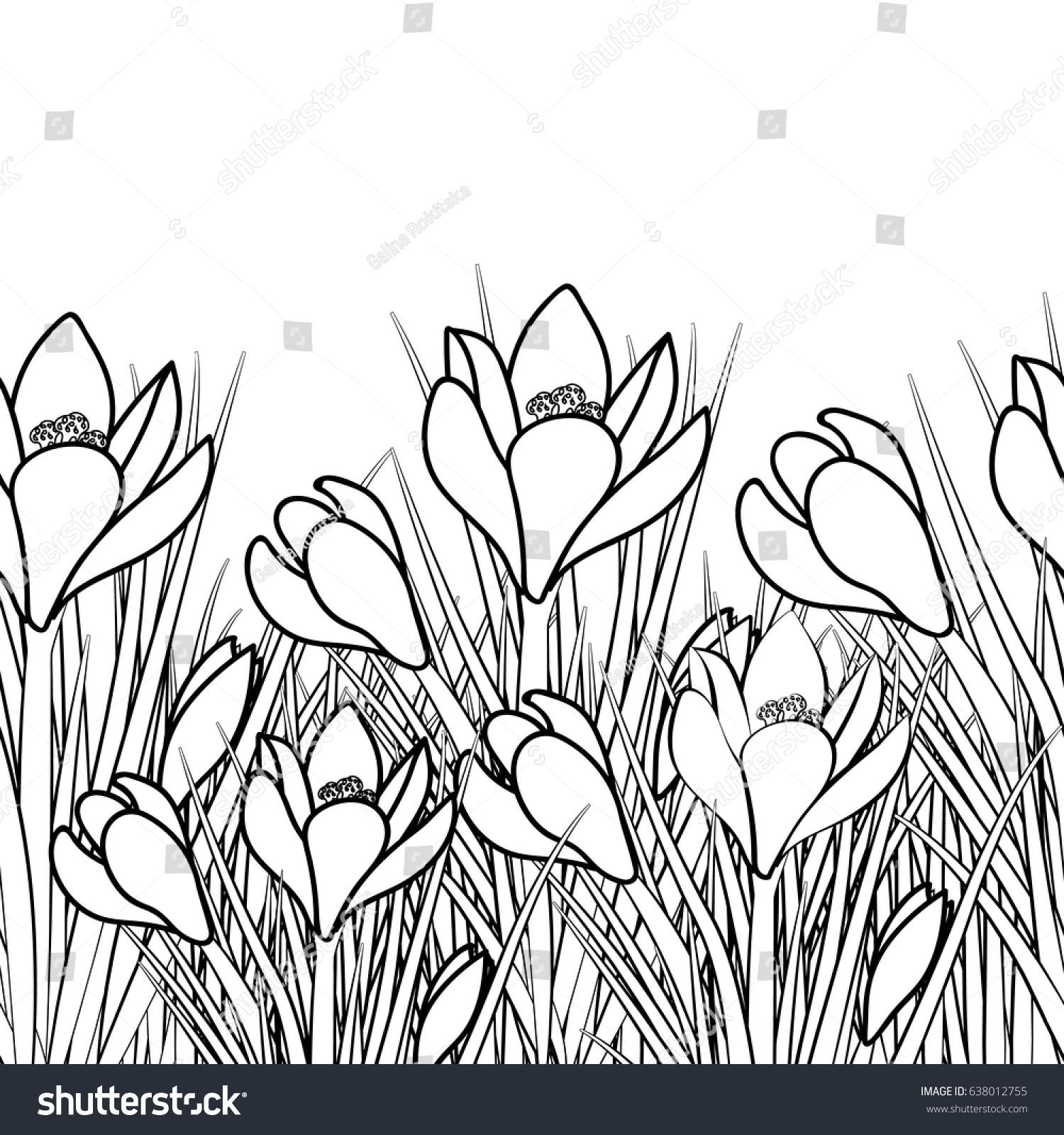 Spring Postcard White Crocus Black Stroke Stock Vector Royalty Free