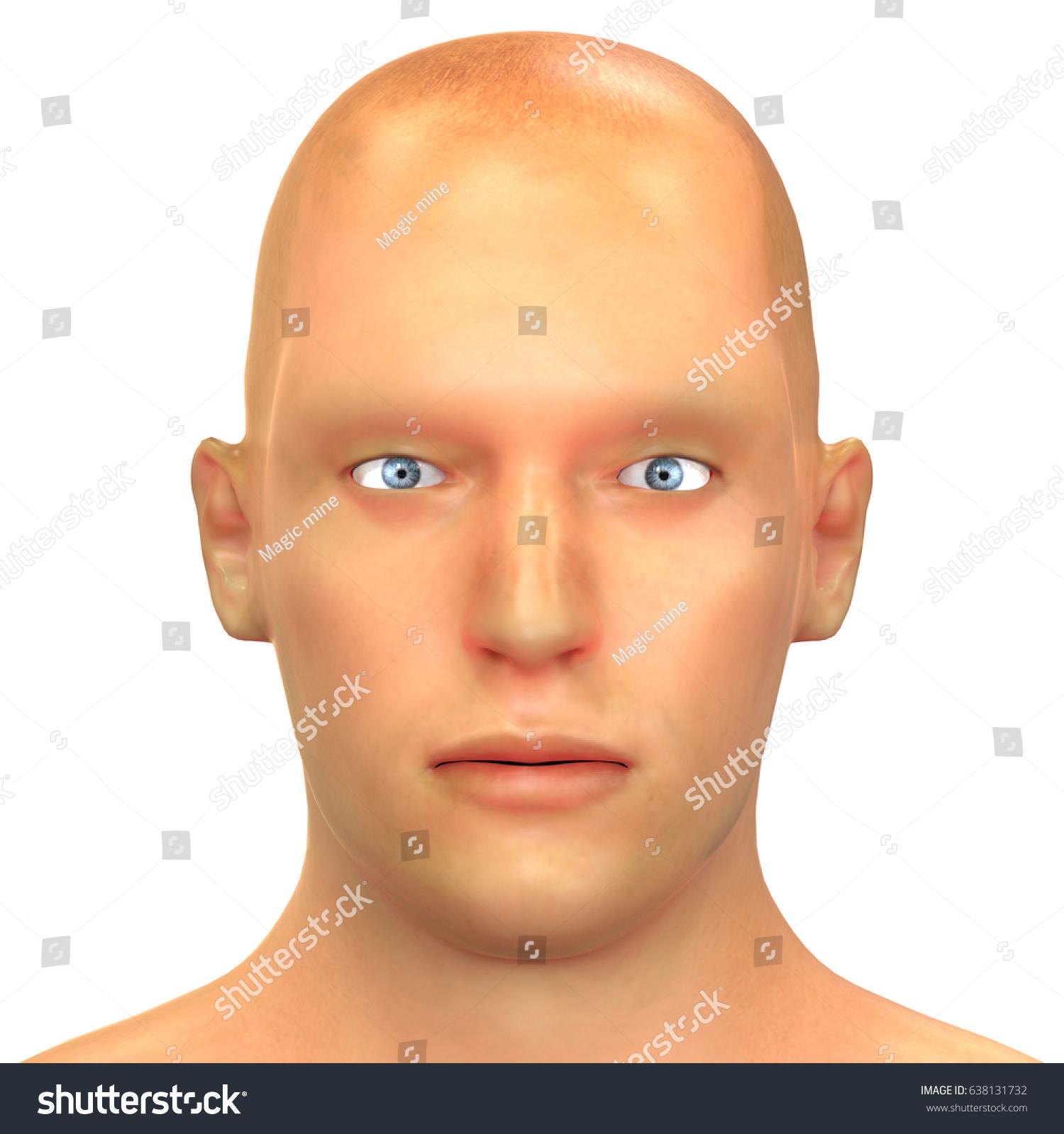 Human Face Anatomy 3 D Stock Illustration 638131732 Shutterstock