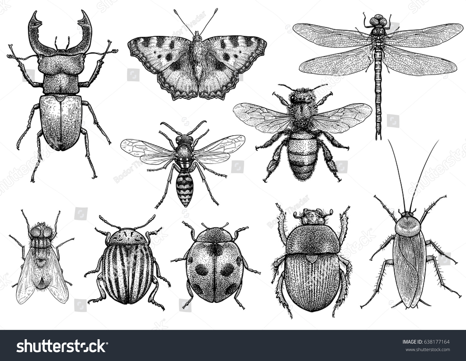 insect illustration drawing engraving ink line stock vector