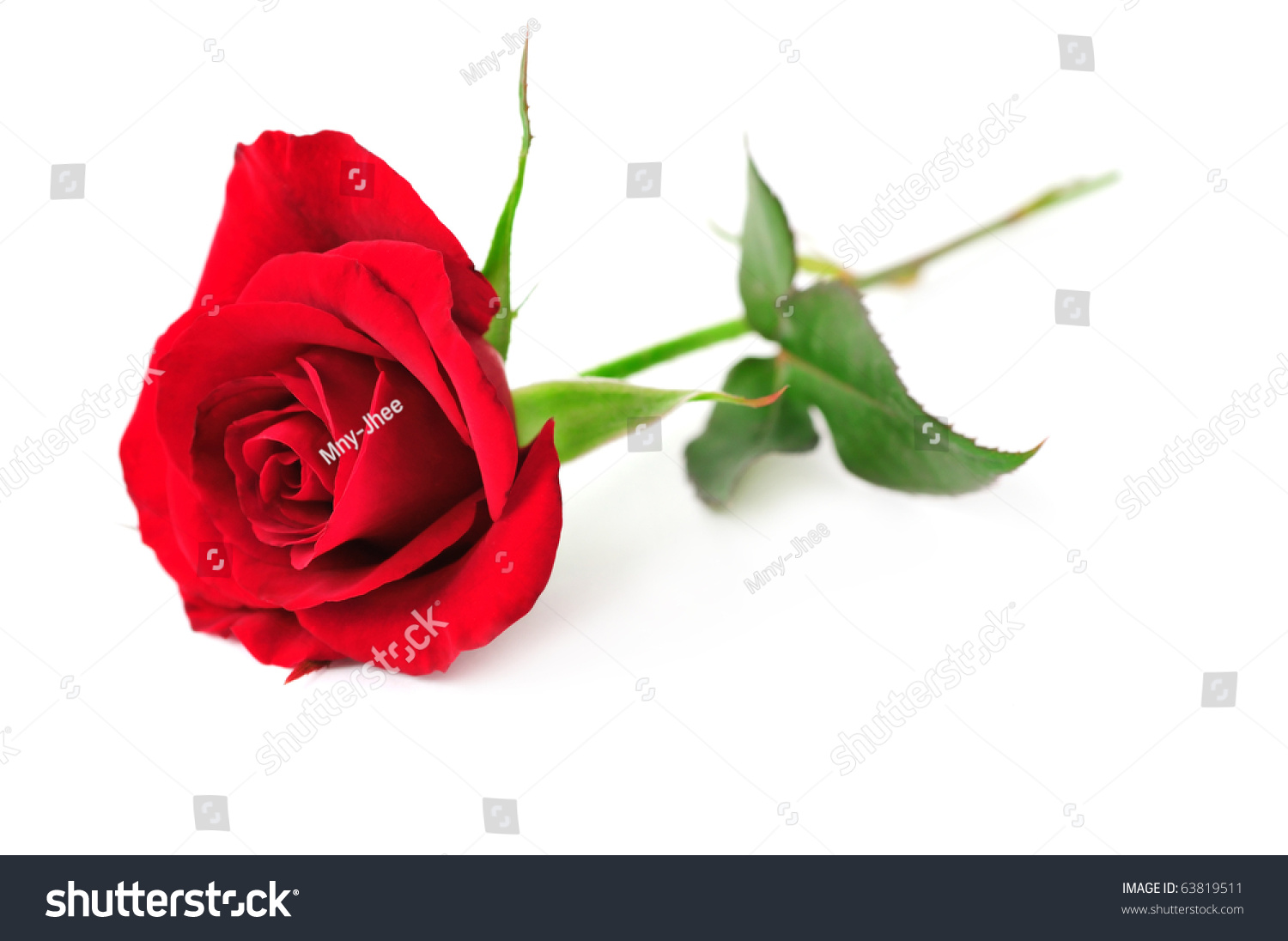 Single Red Rose Flower Isolated On Stock Photo 63819511