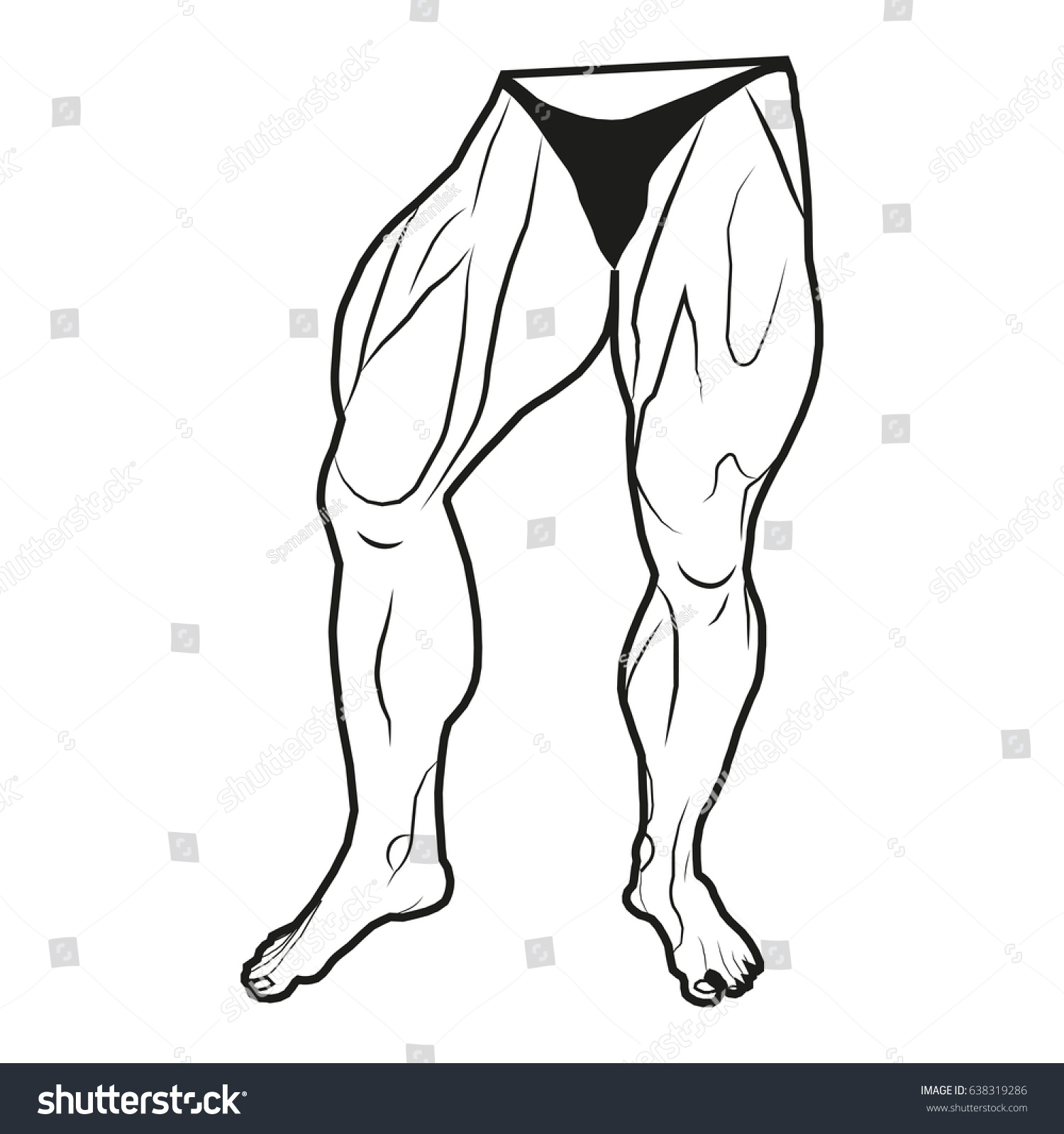 Vector Image Lower Body Man Muscles Stock Vector Royalty Free