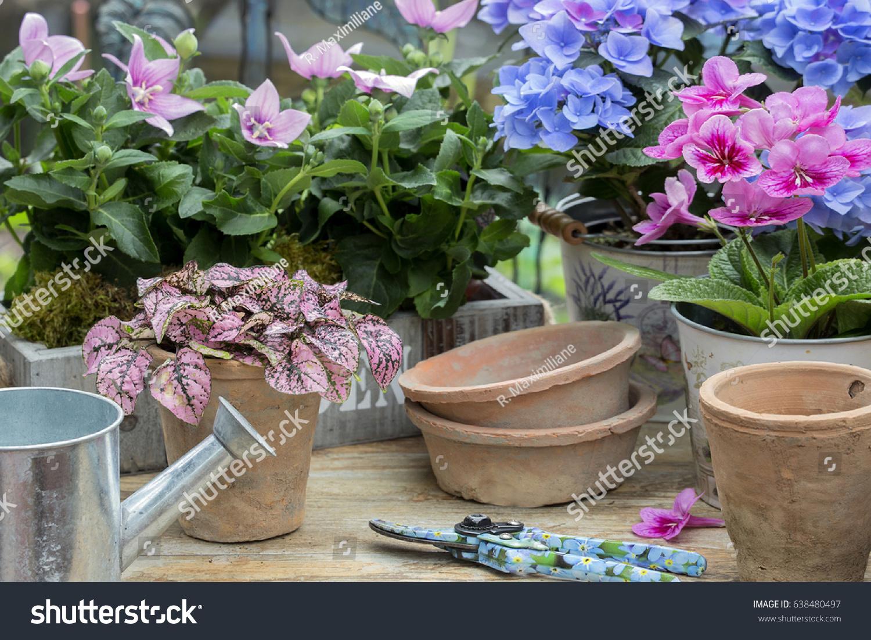 Garten Dekoration, Hydrangea And Mirabilis Jalapa