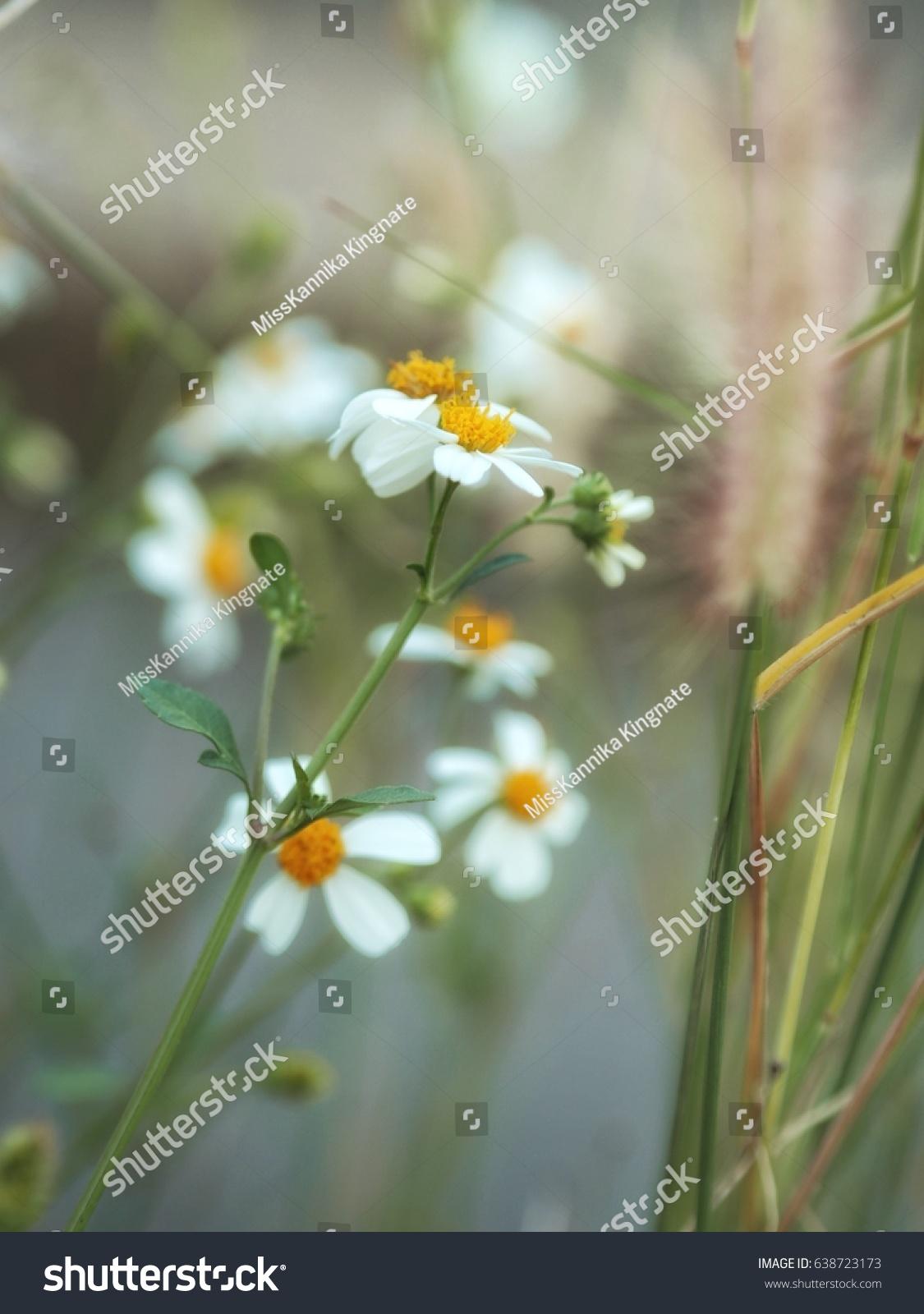 Beautiful White Flower In The Dream In The Green Garden Ez Canvas