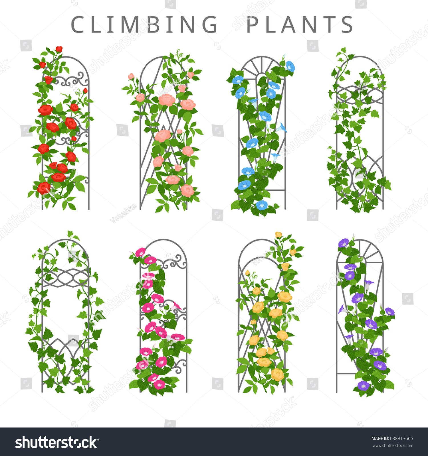 Vector Flat Illustration Garden Trellis Climbing Stock