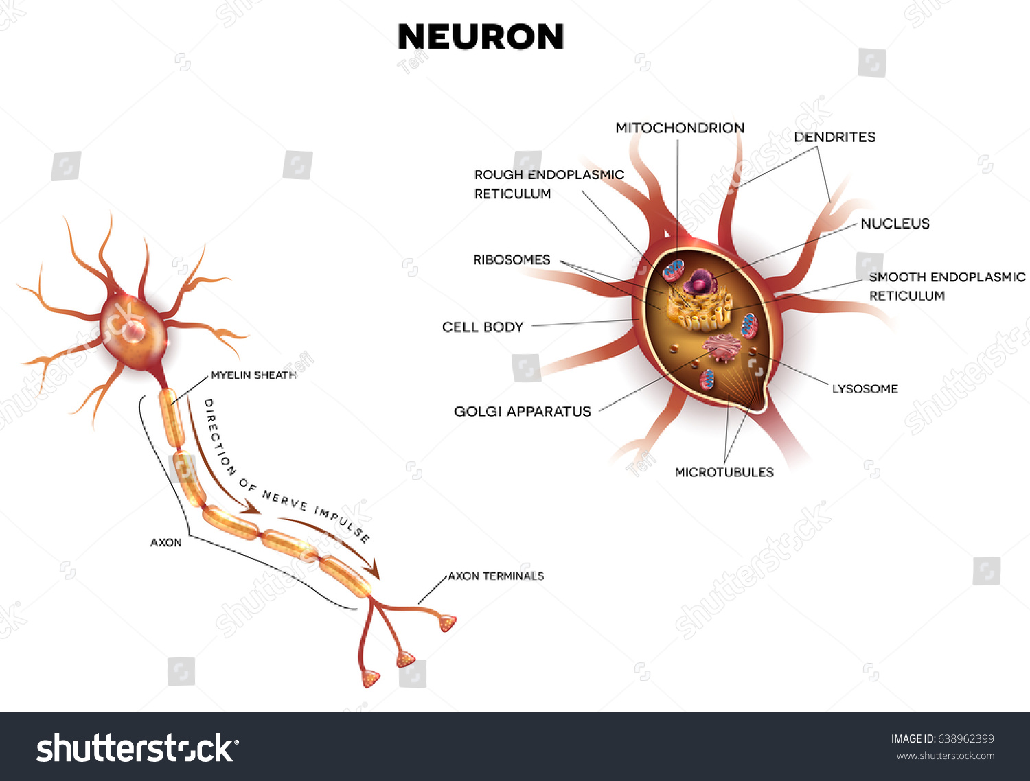neuron nerve cell that main part stock illustration 638962399