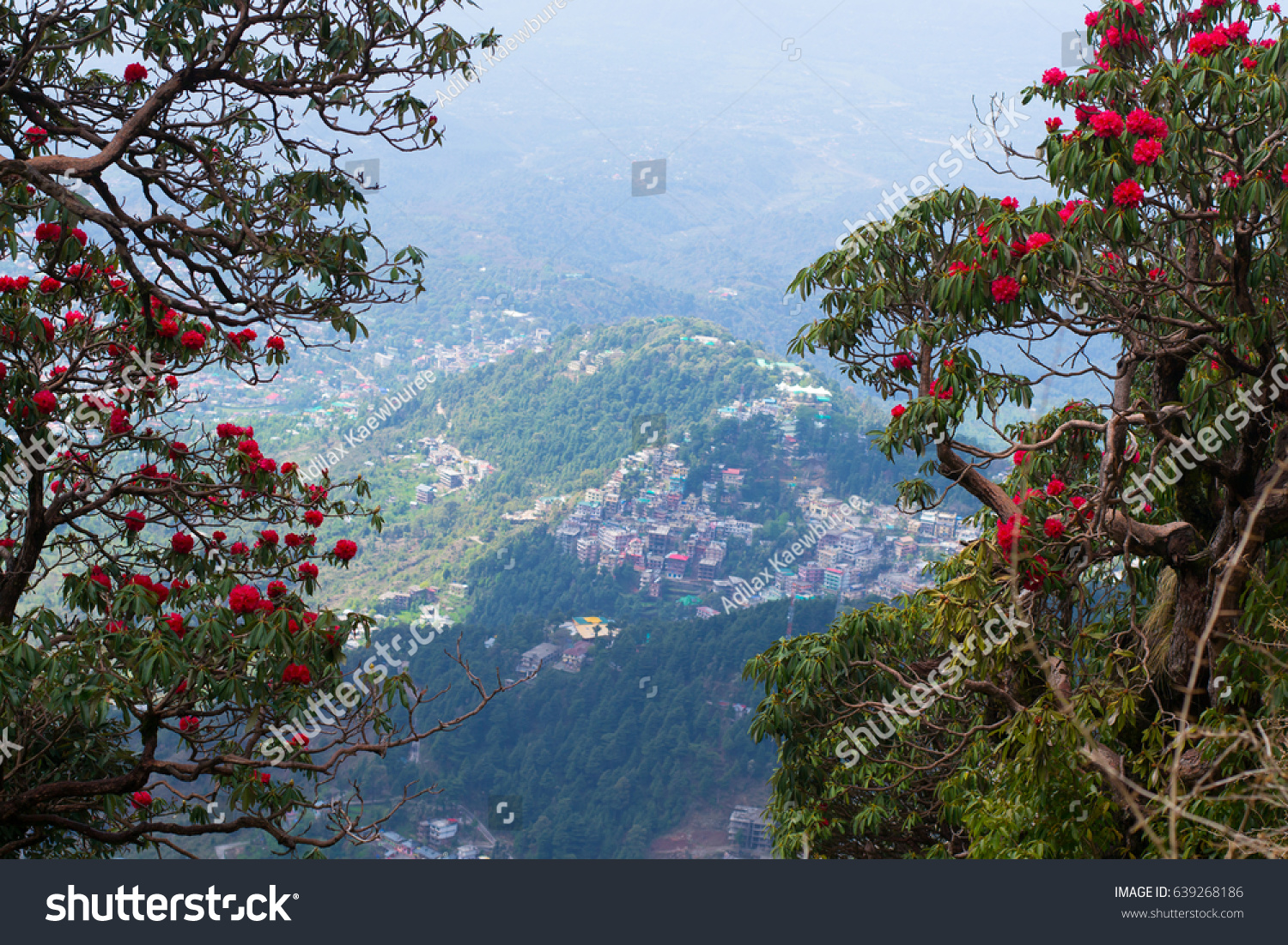 Beautiful Flowers On Mountain Stock Photo Edit Now 639268186