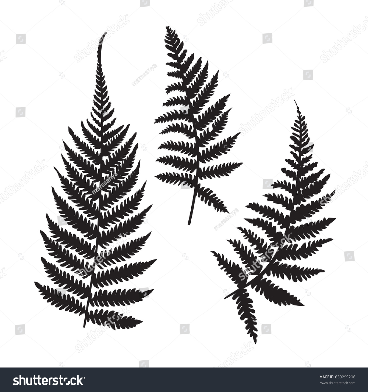 vector fern silhouette collection black isolated stock vector