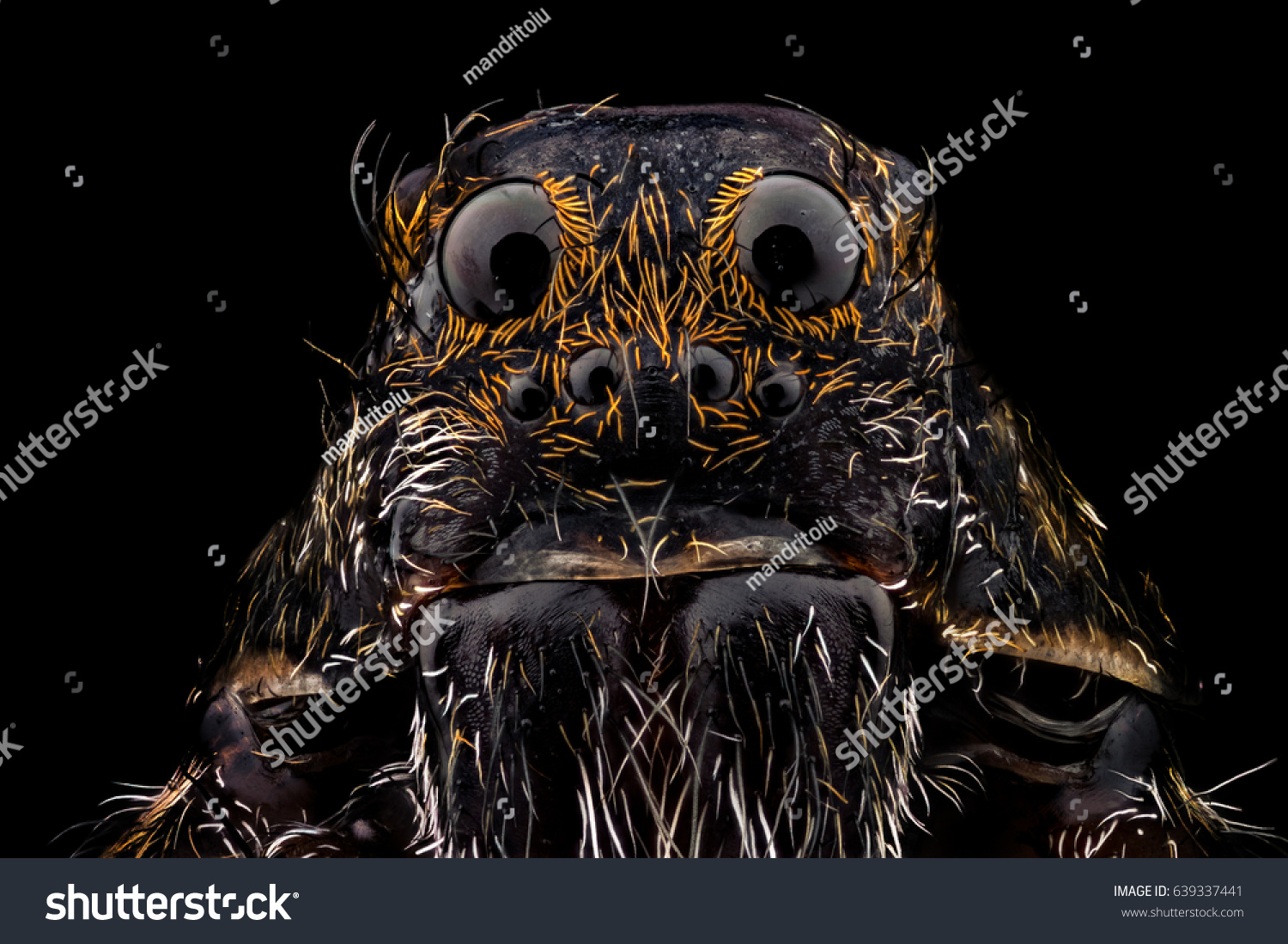 stock-photo-portrait-of-a-wolf-spider-ma