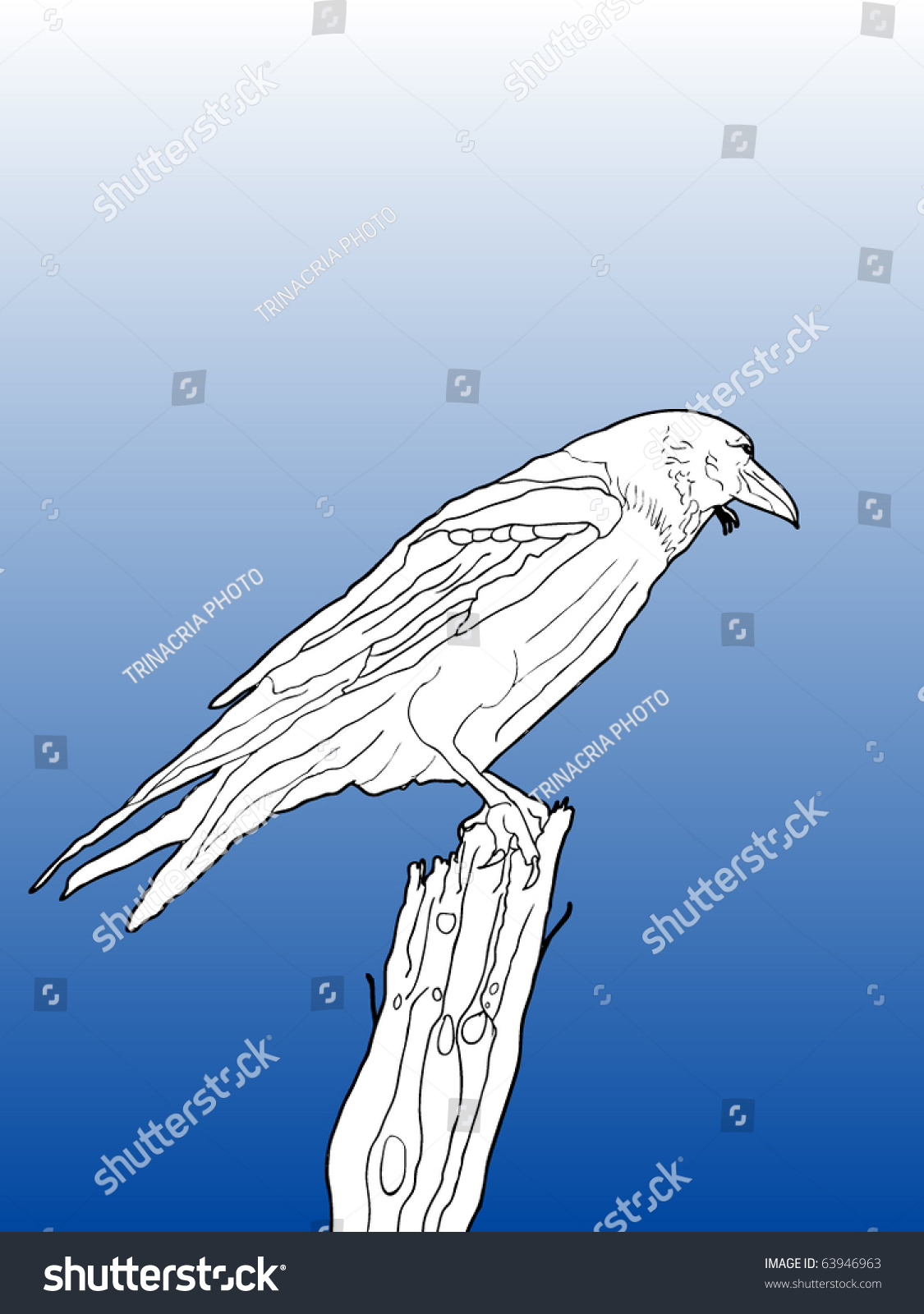 Line Drawing Editor : Vector contour line drawing of a crow on branch with