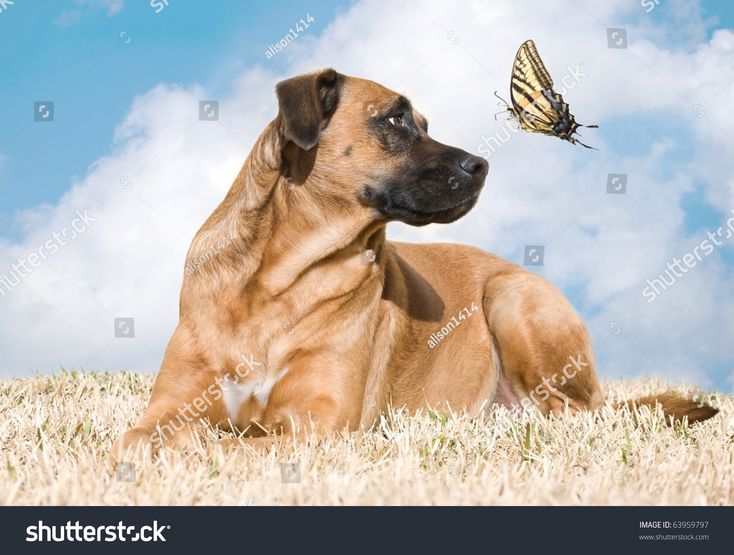 stock-photo-beautiful-dog-looks-up-at-a-