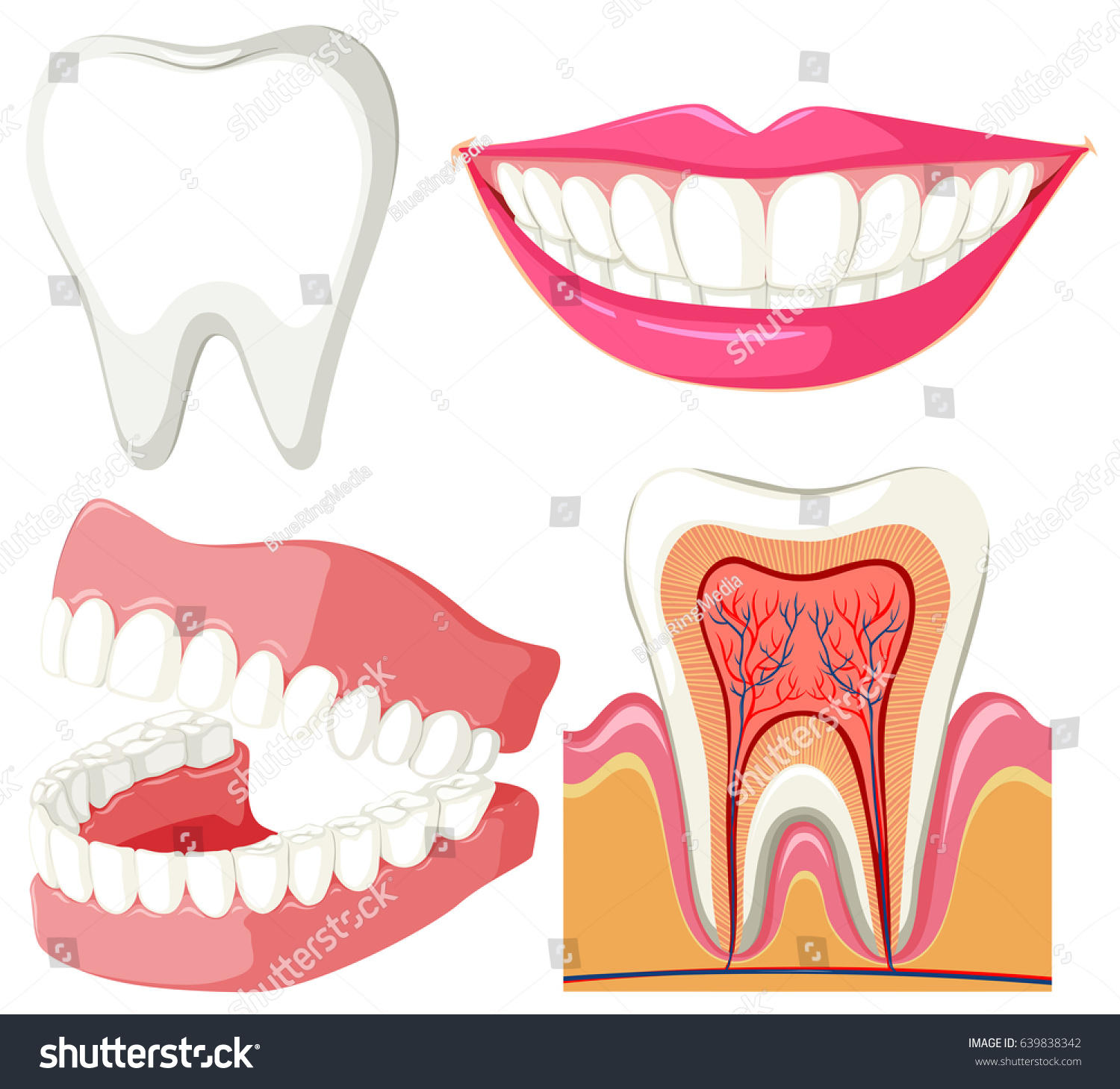 Nice Teeth Wired Shut Festooning - Electrical Diagram Ideas ...