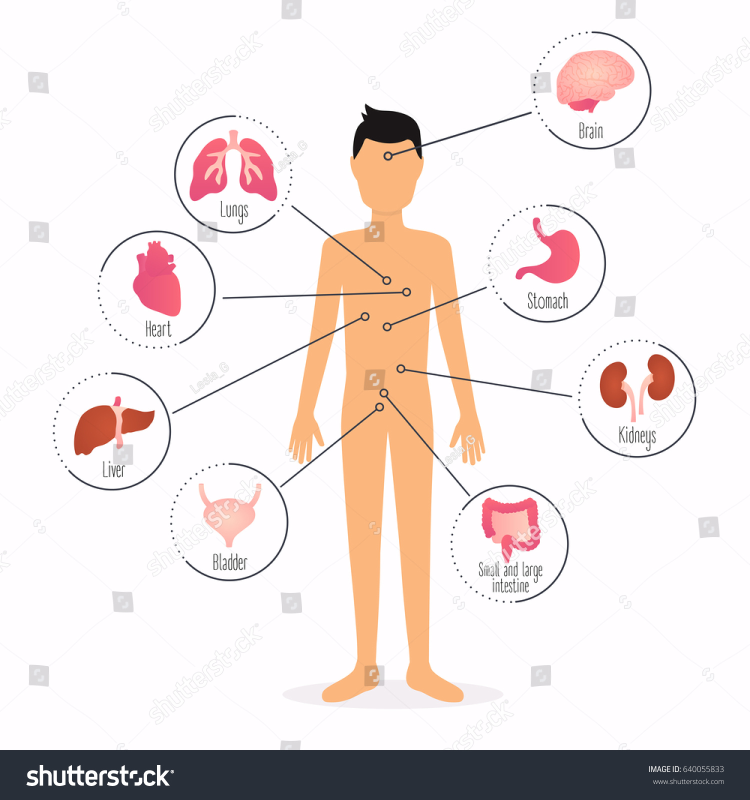 Human Body Internal Organs Human Body Stock Vector 640055833 ...