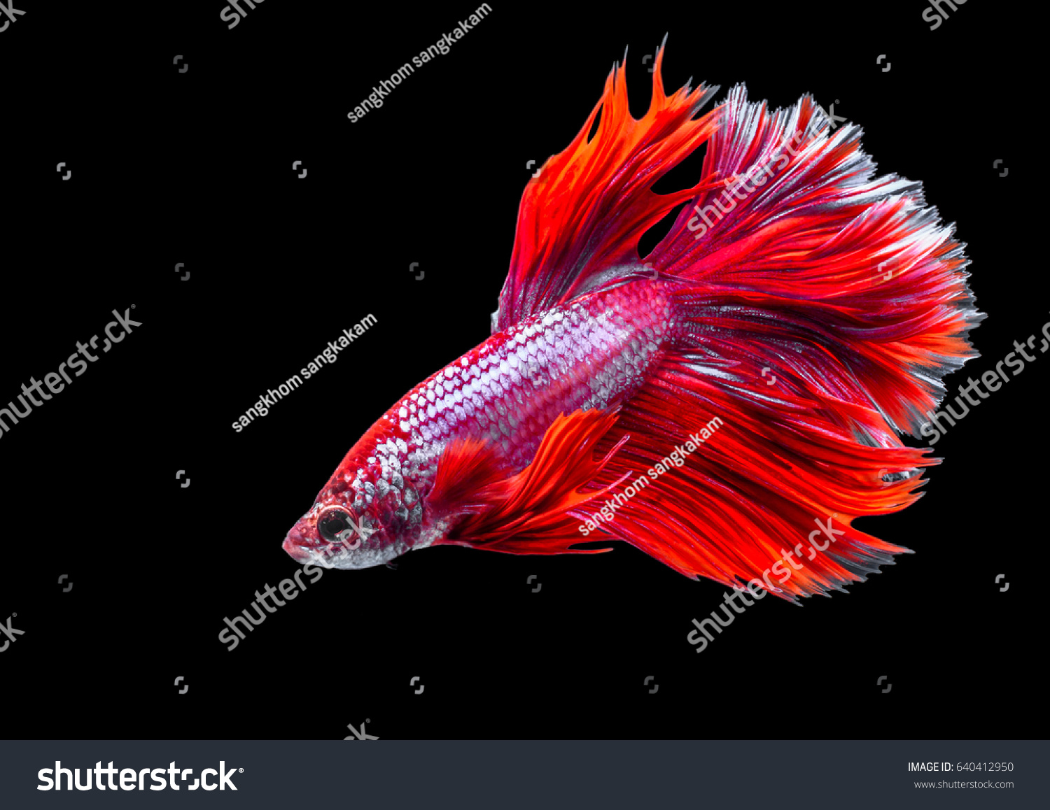 Beautiful Colors Fish Crest - Drawing Coloring - androidharga.info