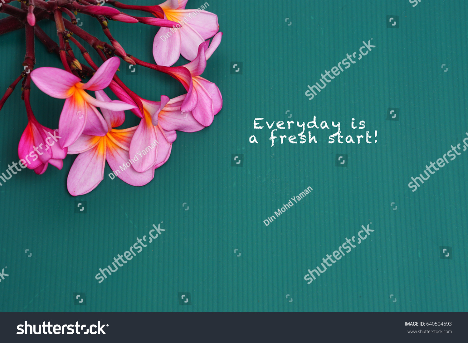 frangipani flower copy space word everyday royalty stock image