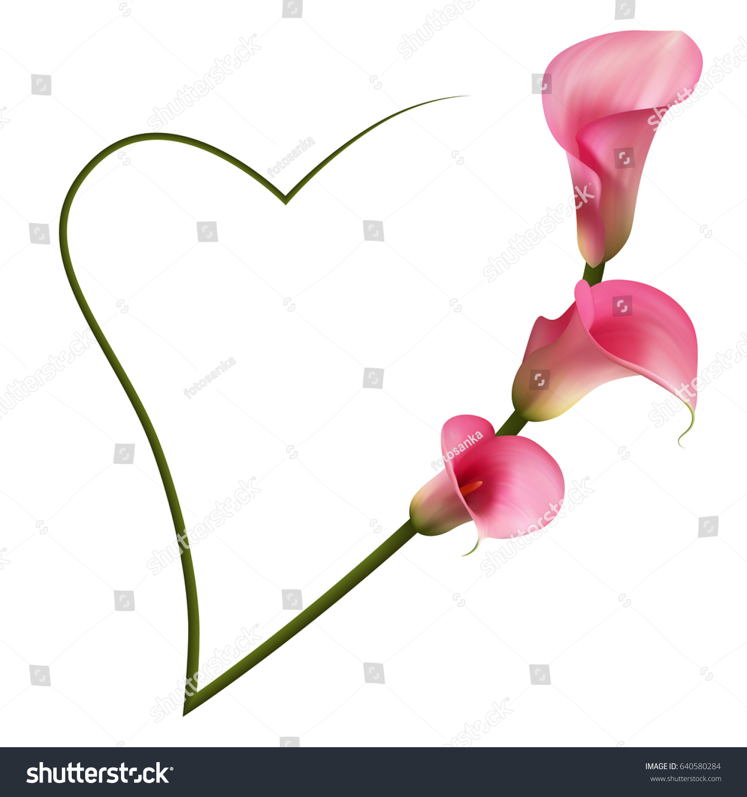 Realistic Pink Calla Lily Romantic Frame Stock Vector Royalty Free