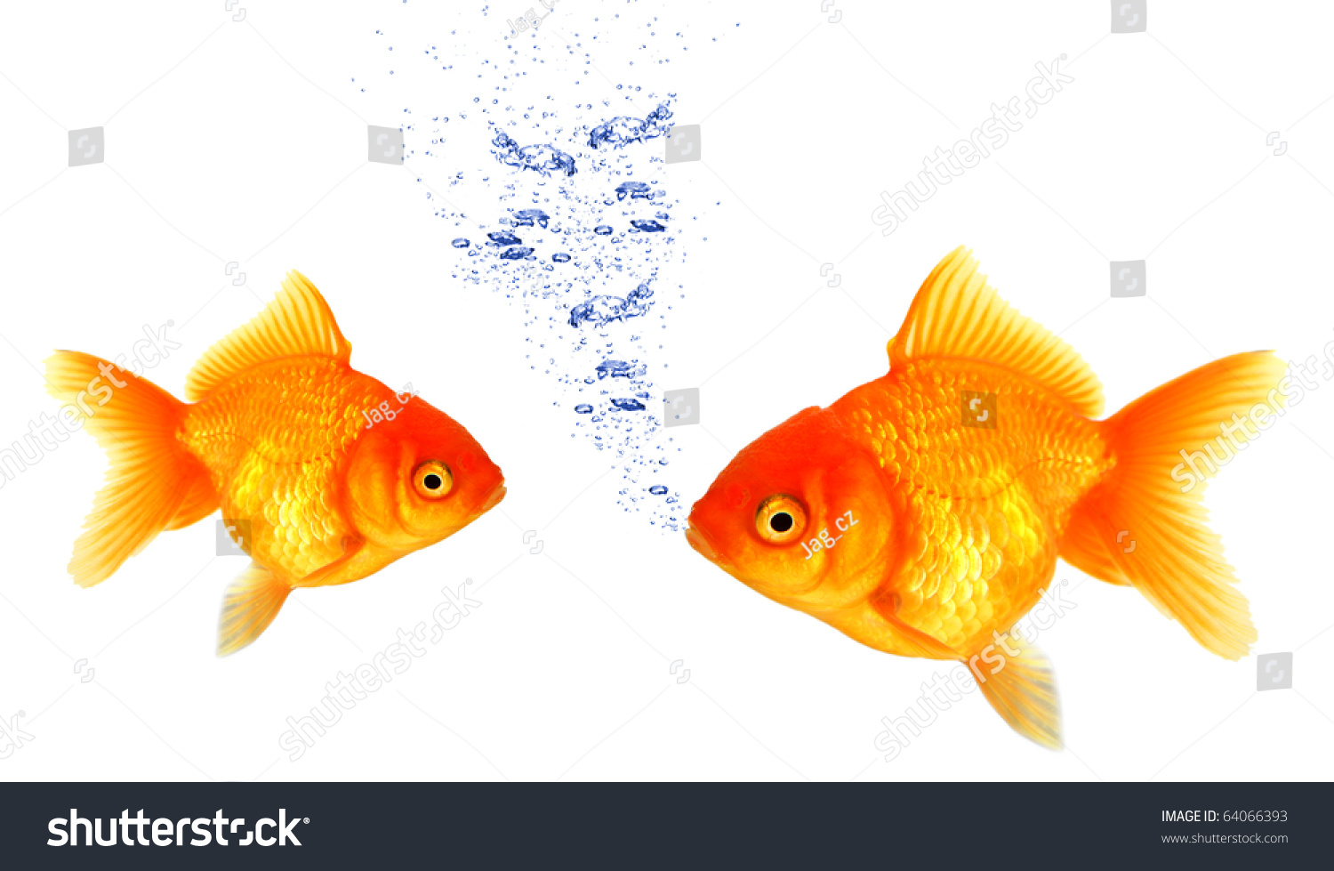 Golden fish breathing under water stock photo 64066393 for How do fish breathe underwater