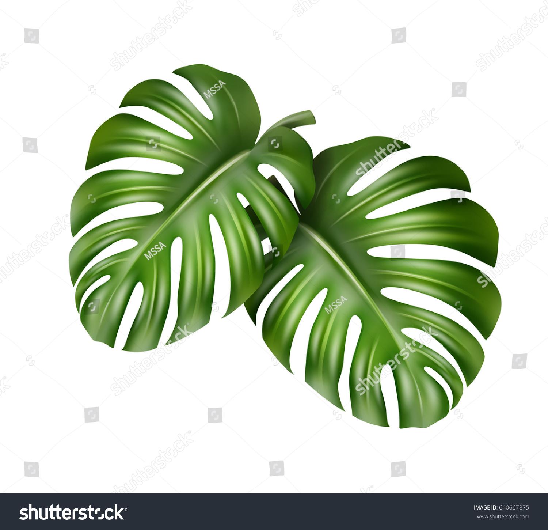 Vector Big Green Leaves Tropical Monstera Vectores En