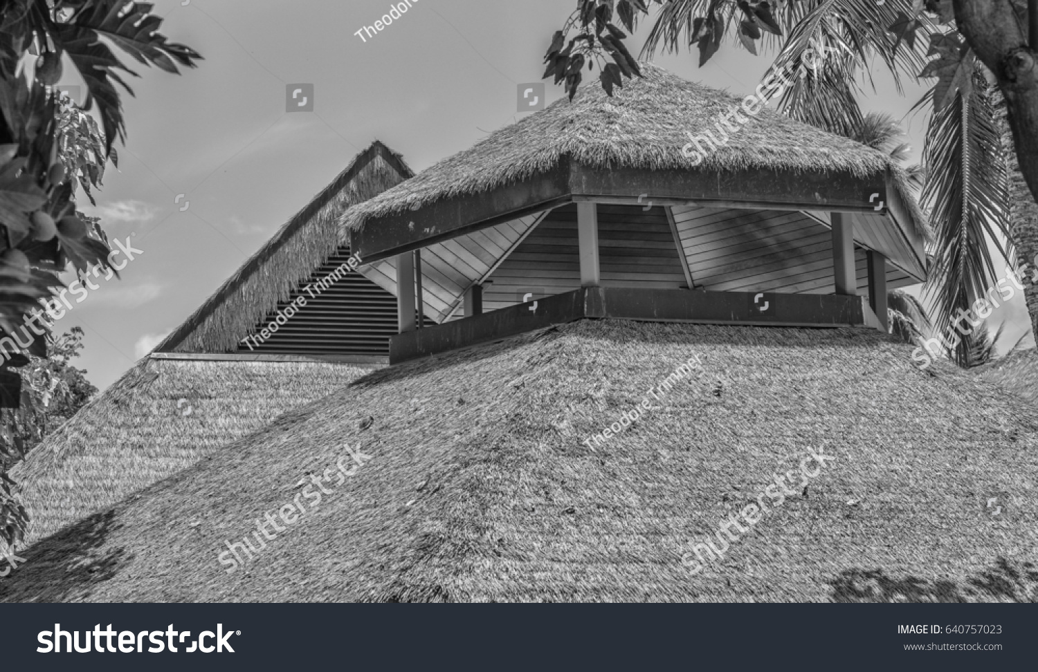 stock-photo-polynesian-thatched-grass-roof-with-wooden-struts-and-tropical-palm-and-plants-surrounding-640757023.jpg