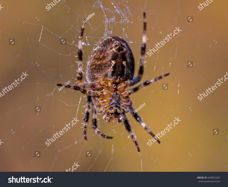 Closeup Underbody Garden Spider Web Blurry Stock Photo (Edit Now ...