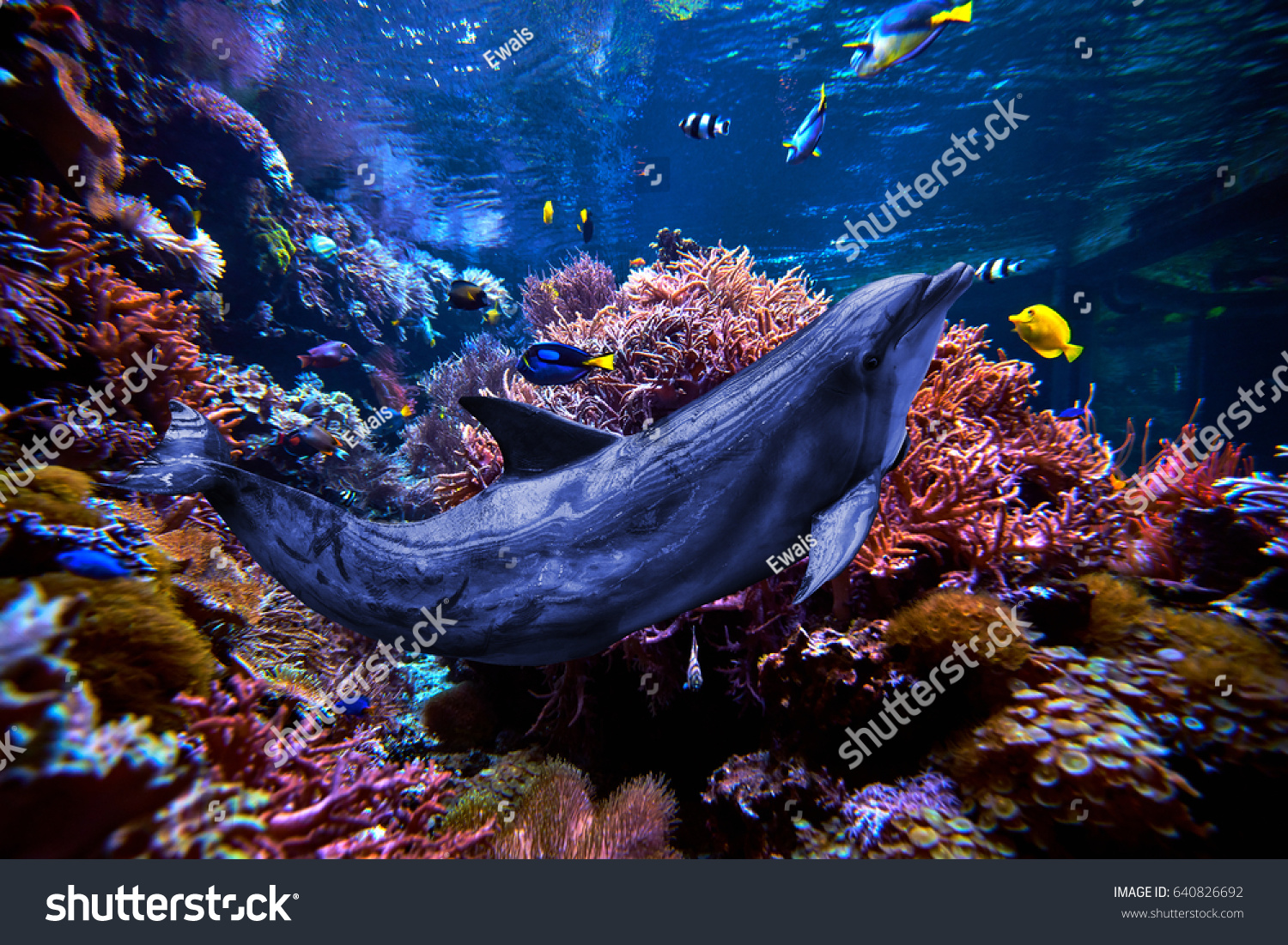 Dolphins sea stock photo 640826692 shutterstock dolphins in the sea publicscrutiny Images