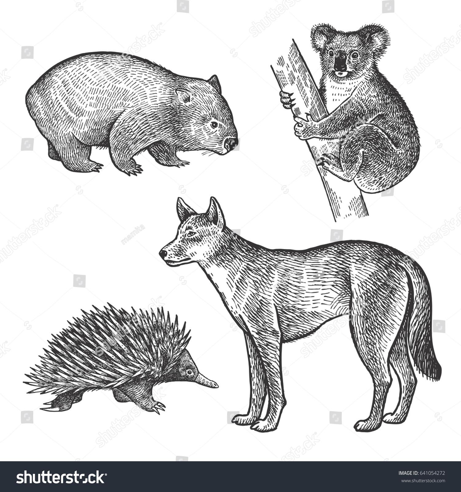 Koala bear wombat echidna dingo dog hand drawing set animals of australia