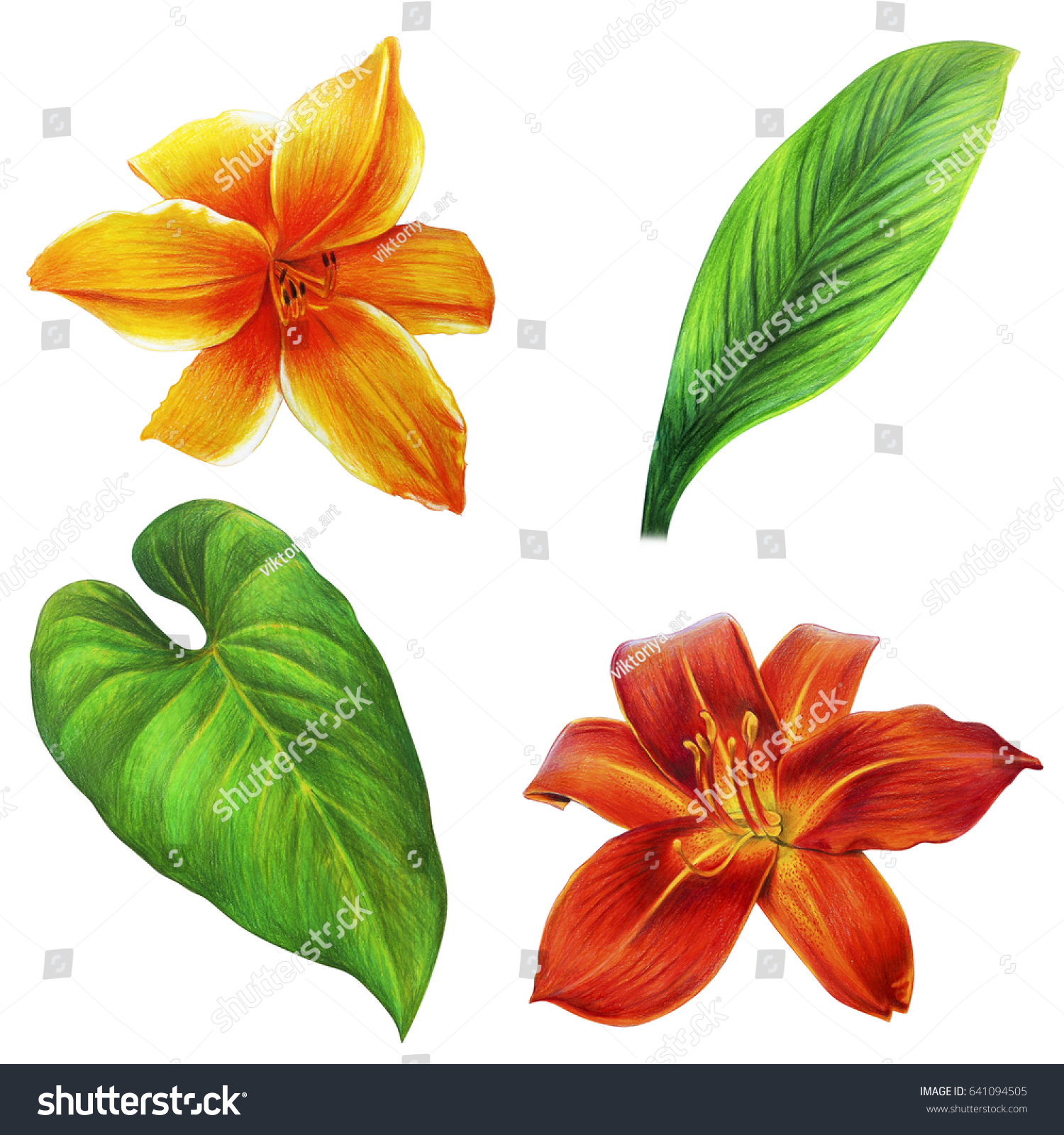 Flowers Leaves Big Drawing Daylily Greenery Stock Illustration 641094505,Boneless Ribs In Oven