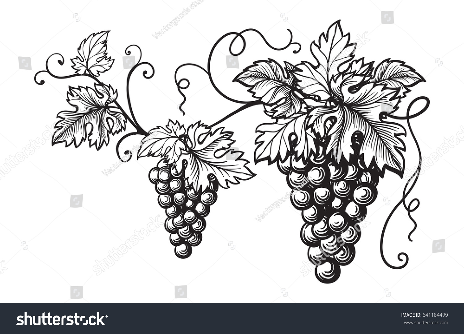 Set Grapes Monochrome Sketch Hand Drawn Stock Photo (Photo, Vector ...