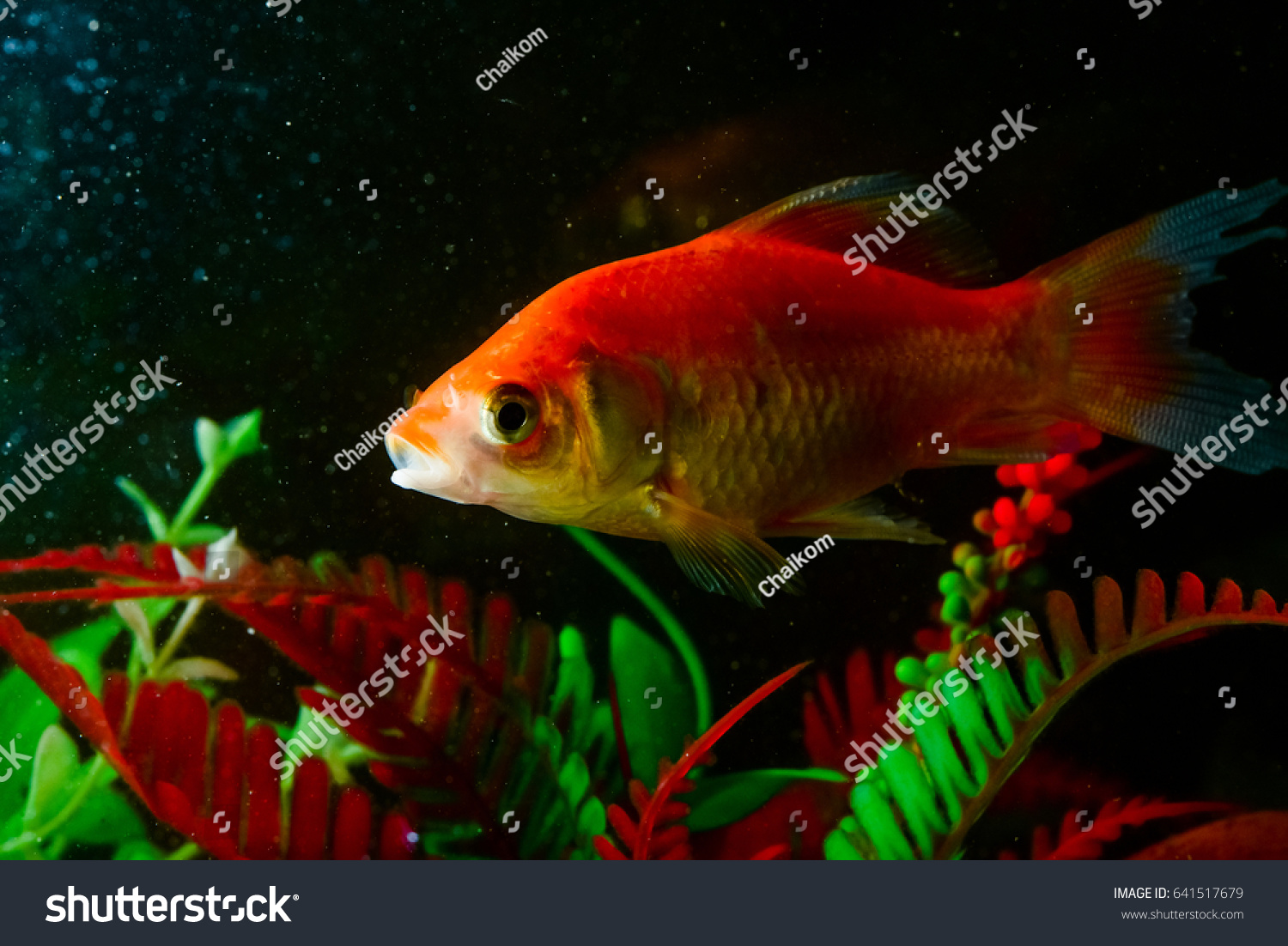 Colorful Fish Aquarium Stock Photo (Royalty Free) 641517679 ...