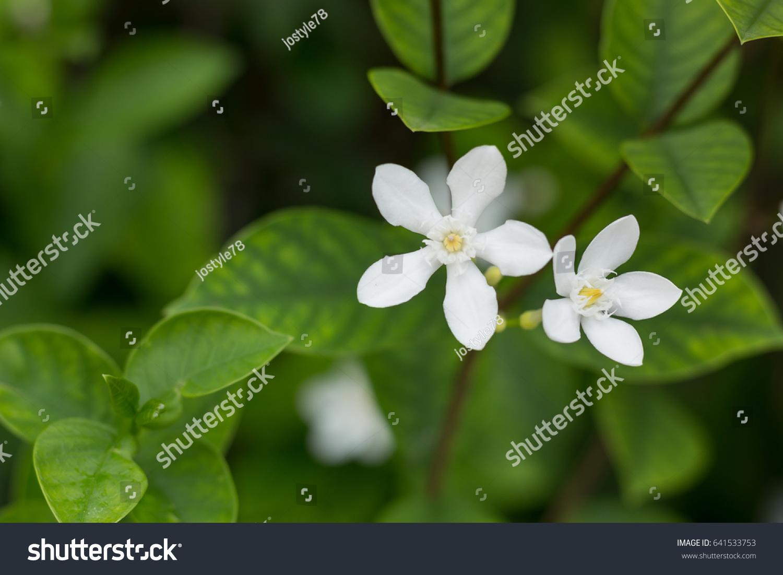 Small white flowers backgroundtextures ez canvas mightylinksfo