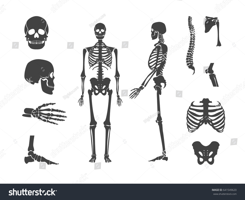 Silhouette Black Human Skeleton Part Set Stock Vector 641549620