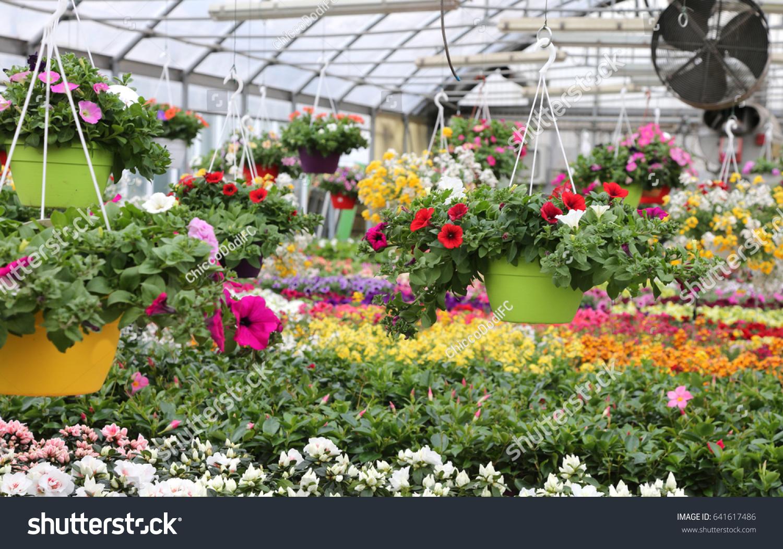 Interior Wide Greenhouse Sale Plants Flowers Stock Photo Edit Now
