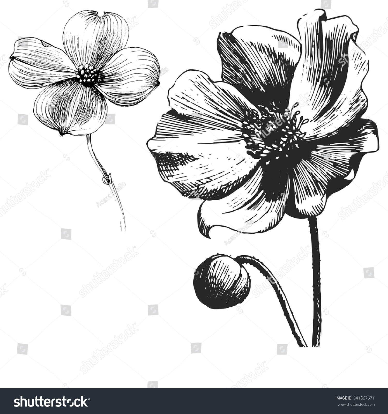 Poppy Flower Drawing Vector Illustration Line Stock Vector Royalty